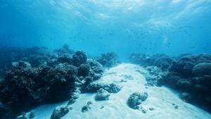 Większością powierzchni światowych oceanów zawiaduje Międzynarodowa Organizacja Dna Morskiego (MODM) z siedzibą na Jamajce