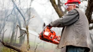 Posiadacz nieruchomości ponosi opłaty za usunięcie drzewa lub krzewu
