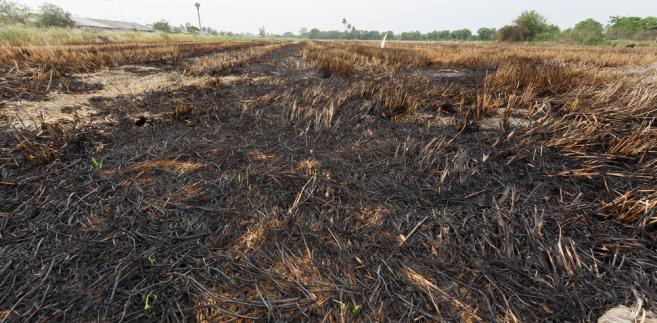 pożar wypalanie traw