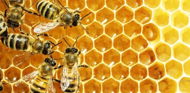 pszczoły miód