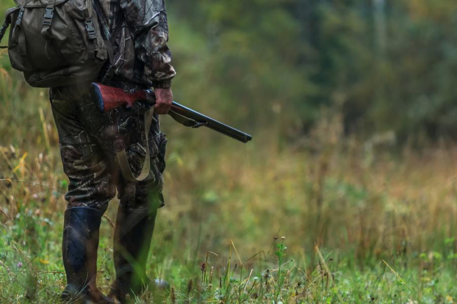 polowanie 1