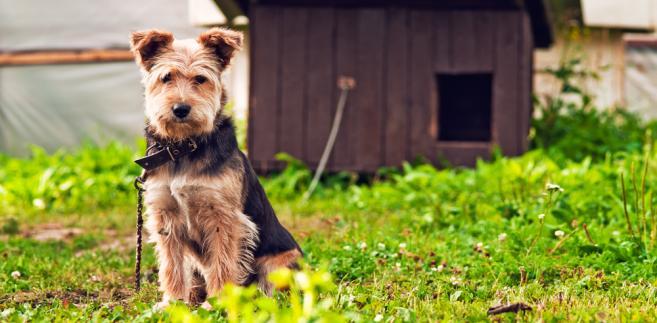 W ramach ulgi odliczać można wyłącznie wydatki na utrzymanie psa asystującego.