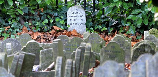 Cmentarz dla psów
