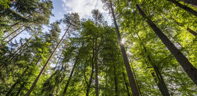 Obóz dla Puszczy był reakcją na wprowadzenie do Puszczy Białowieskiej ciężkiego sprzętu służącego do wycinki drzew