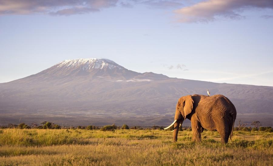 Kenia - widok na Kilimandżaro