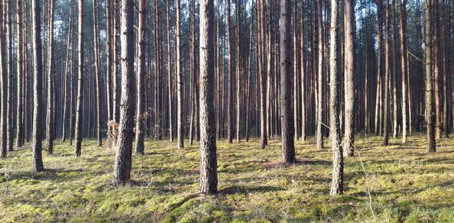 Pracownicy Lasów Państwowych oskarżani są przez obrońców Puszczy Białowieskiej o przekroczenie obowiązków poprzez np. nieuprawnione użycie siły wobec protestujących w czasie wycinki drzew w puszczy.