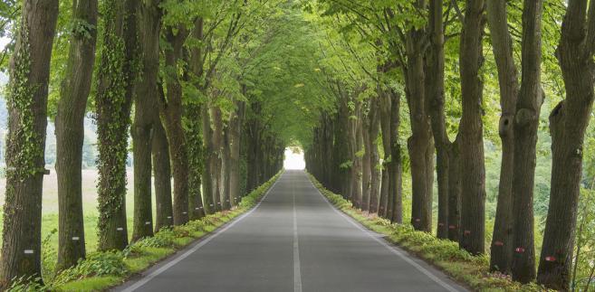 Lokalne władze bieżące potrzeby w przypadku dróg szacują na ok. 100 mld zł.